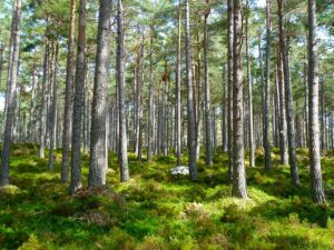¿En qué consiste la bioeconomía o economía ecológica y cómo se desarrolla? 2